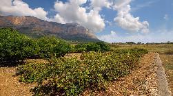 Jalon wine